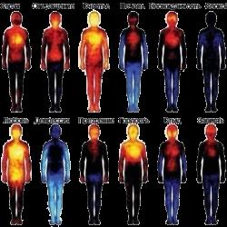 проявление чувств в теле